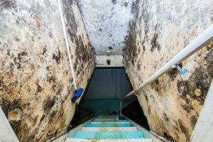 3 Reasons to Get Mold Cleaned by a Professional – Fort Myers FL