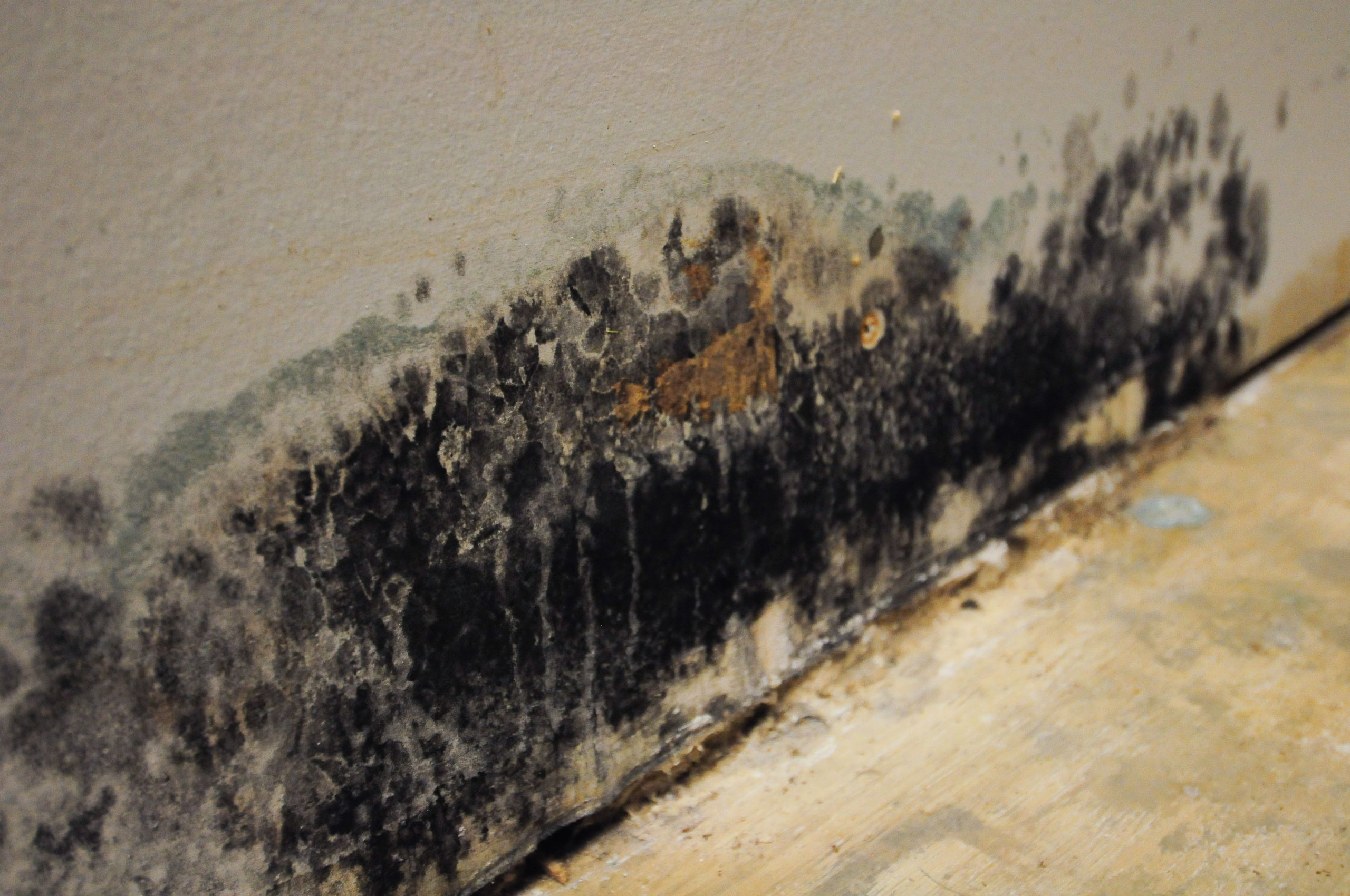 How do You Prevent Black Mold?
