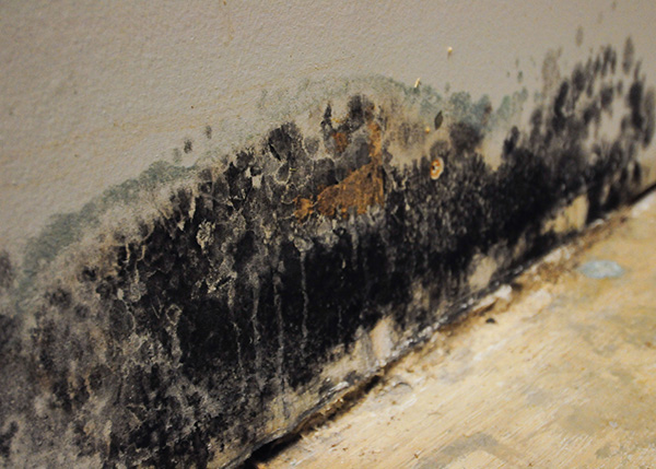 Can You Get Sickness from Mold?