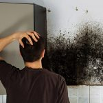 Mold Remediation by ServiceMaster by Wright