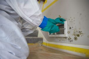 The Importance of Safety During Mold Removal in Florida