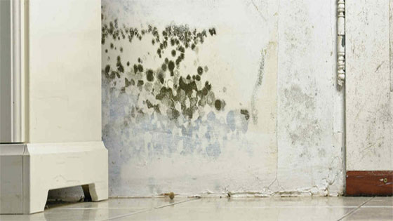 3 Reasons to Get Mold Cleaned by a Professional