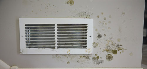 Statistics Show Mold is the Biggest Threat to Air Quality