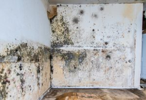 Water Damage and Mold Remediation in a Naples Condo