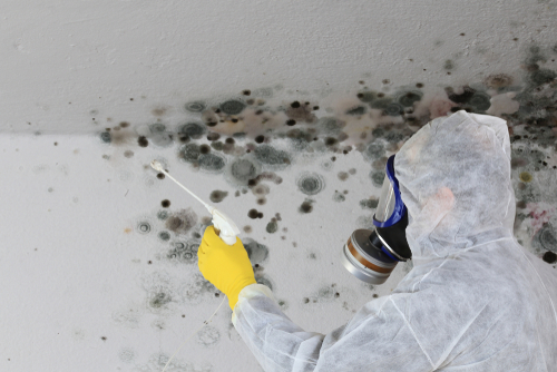 Mold Problems – How To Remove Mold From Kitchen and Bathroom Tiles