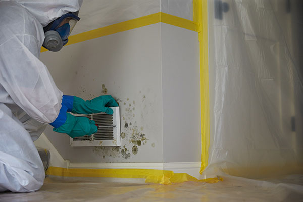 Why Hire a Professional Mold Remediation Company in Florida?